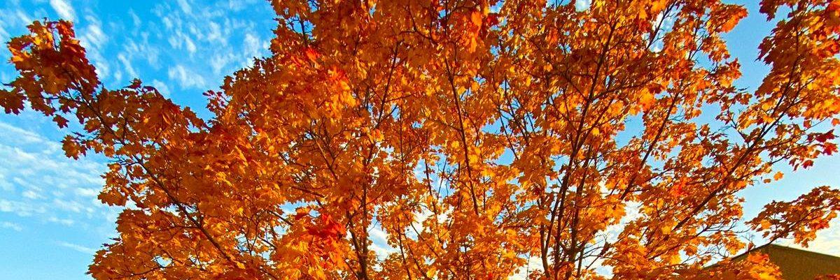 Wir sind in Herbststimmung